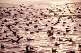 Sea of Bird