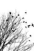 Birds Flying Off a Tree